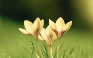 Цветы художественное фото