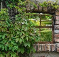 Многолетние садовые лианы
