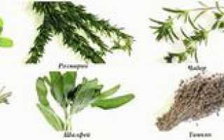 Пряные травы для огорода многолетние