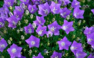 Цветы на садовом участке