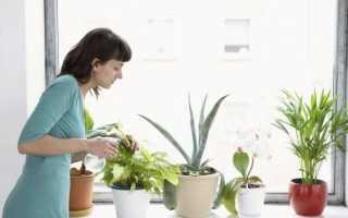 Перекись водорода для комнатных растений применение