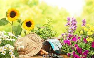 Подкормка сахаром комнатных цветов