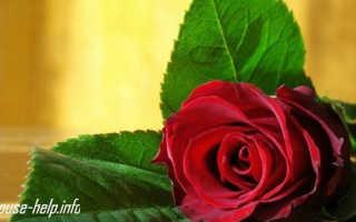 Видео как продлить жизнь розам