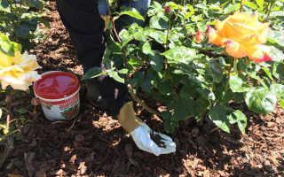 Осенняя подкормка роз
