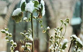 Как повысить морозостойкость растений
