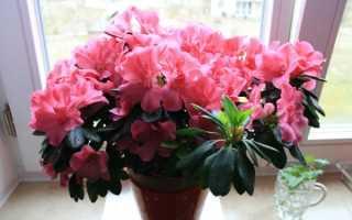Самые популярные комнатные растения, которые цветут круглый год