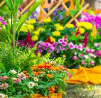 Многолетние растения для создания белого сада