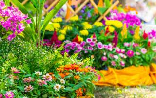 Цветы и декоративные растения