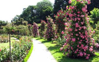 Использование розария в ландшафтном дизайне