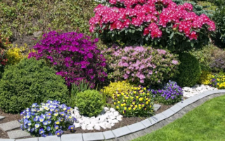 Многолетние цветы цветущие летом