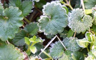 Как узнать, будут ли заморозки в мае