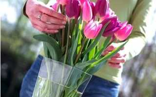 Рекомендации по хранению цветов срезанных в цветнике