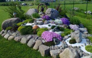 Цветы для альпийской горки названия и фото