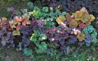 Многолетние тенелюбивые и теневыносливые растения для сада