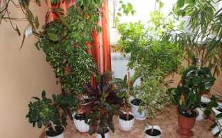 Какие комнатные растения полезны для дома