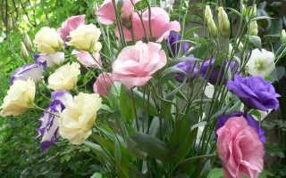 Как называются цветы, похожие на розы