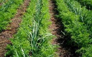 Совместимость растений при посадке в огороде