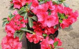 Цветы с красными цветами фото и названия