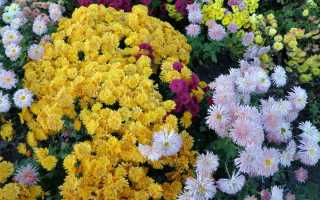 Растения цветущие до глубокой осени