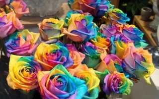 Как делают цветные розы