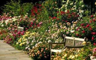 Описание самых красивых лучших роз ииххарактеристики