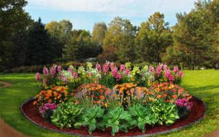 Красивые цветники из многолетников фото