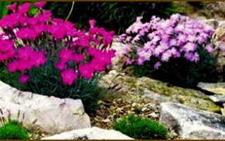 Цветы и растения для каменистого сада