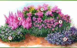Как сделать цветник непрерывного цветения из многолетников