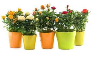 Идеальный «горшочек» для роз