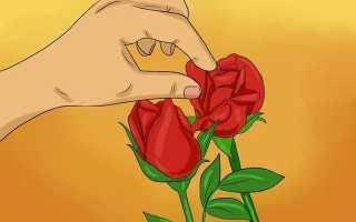 Как сохранить лепестки роз в домашних условиях