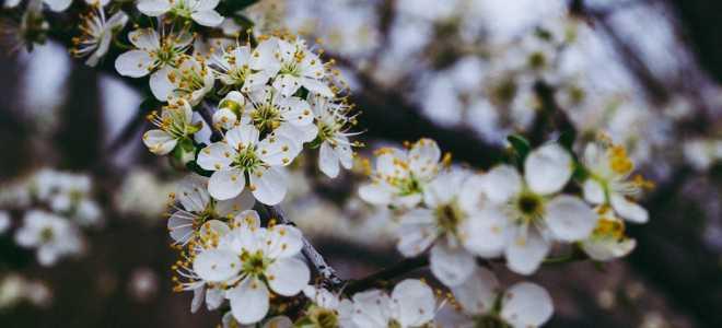 Кустовые белые цветы