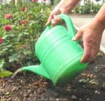 Органические удобрения для роз
