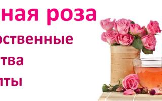 Лечебные свойства розы