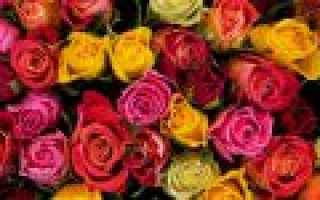 Какое значение имеют розовые розы