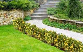 Низкорослые кустарники для бордюра многолетние