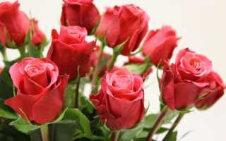 Как купить розу которая сможет долго быть свежей