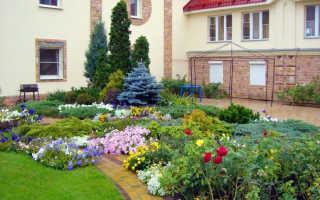 Традиционные однолетние цветы для дачной клумбы