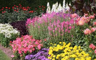 План цветника непрерывного цветения