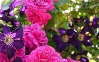 Как оформить клумбу с розами