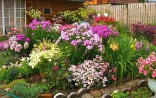 Цветы не требующие частого полива