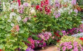 Цветы для солнечной грядки