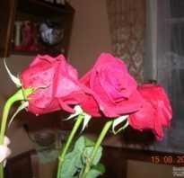 Как освежить розы