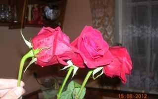Как оживить розы кипятком