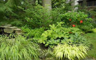 Многолетние растения для лесного участка