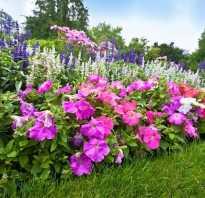 Многолетние цветущие растения