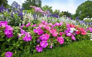 Цветы на огороде многолетние