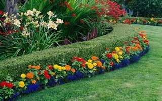 Многолетние растения в саду и на даче
