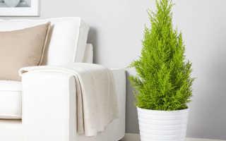 Какие комнатные растения очищают воздух в квартире