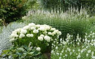 О подборе растений для цветника