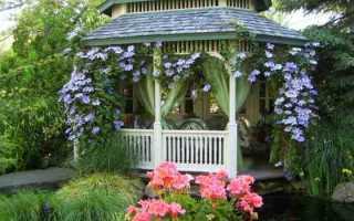 Многолетние плетущиеся растения для сада и беседок